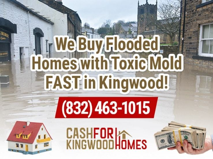 kingwood water damage and mold